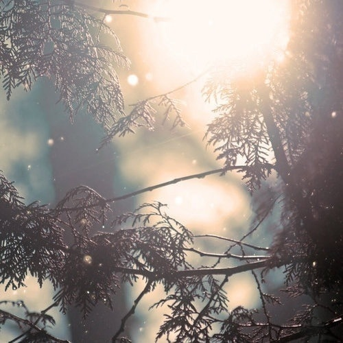 Snow Falling in the sunlight onto a pine tree branch Seasonal Affective Disorder