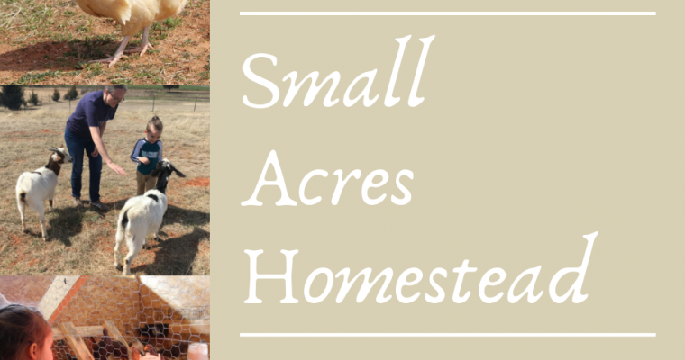 A Visit to the Small Acres Homestead